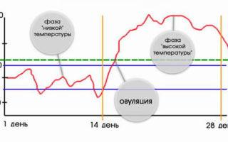 Как определить овуляцию в домашних условиях. признаки, симптомы, способы определения