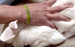 Молочная кислота для кроликов: инструкция и способы применения для лечения и профилактики болезней, дозировка и пропорции, чем можно заменить