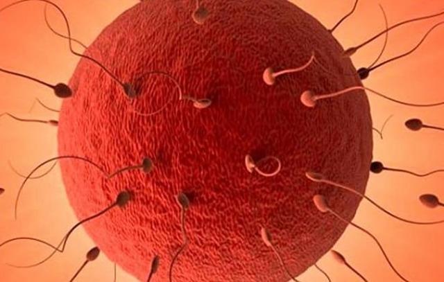 Аденомиоз и беременность: можно ли забеременеть при диффузной форме, можно ли делать эко, как вылечиться