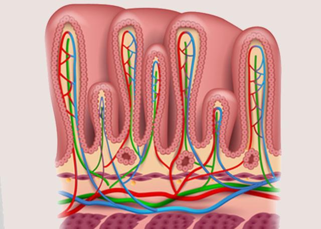 Слизистая оболочка – уникальный барьер нашего организма