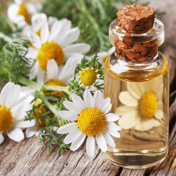 Что такое масло ромашки для волос и как его использовать? Какие полезные свойства есть у масла ромашки и как его применять?