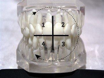 Зубная формула у детей в 3, 6, 10 и 12 лет: нумерация и используемые в стоматологии схемы