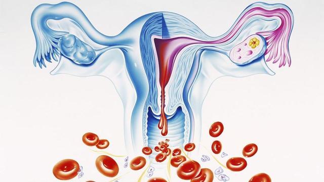 Каким должен быть уровень гемоглобина во время месячных. Гемоглобин перед месячными снижается или повышается