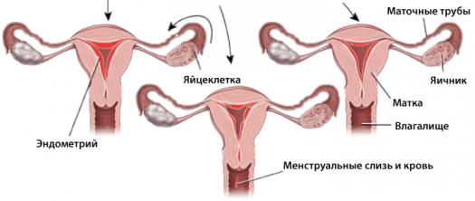 Сколько крови теряет женщина при месячных: за сутки, за цикл, норма, причины отклонений и нормализация