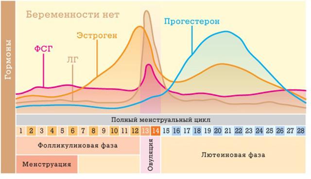 Размер желтого тела после овуляции: что это такое, какова норма на узи, фазы, причины отклонений, когда начинать беспокоиться
