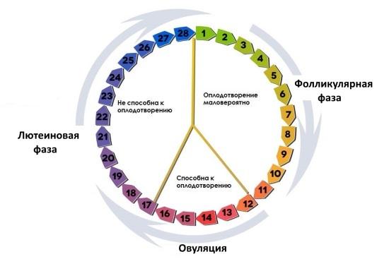 Кольпоскопия: на какой день цикла делать и когда лучше не выполнять