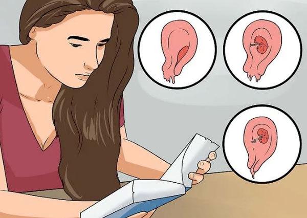 Тонкий эндометрий – причины и лечение: какая норма толщины эндометрия для беременности