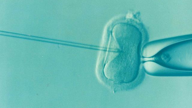Две овуляции в одном цикле: может ли созревать сразу 2 и более яйцеклеток, симптомы, причины и результаты такого явления