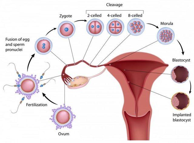 Когда приходят месячные после отмены утрожестана - сколько дней ждать менструации