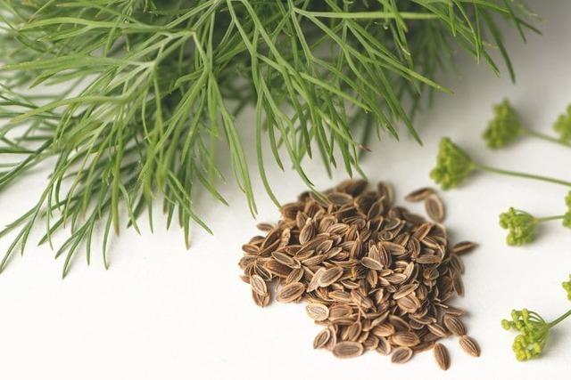 Семена льна при климаксе: как принимать, рецепты настоев, отваров, противопоказания