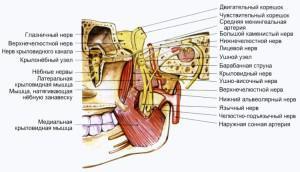 Иннервация зубов: понятие, особенности проведения процедуры и отзывы