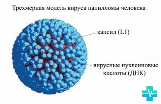 Скрытые инфекции у женщин — прибыльная часть медицины