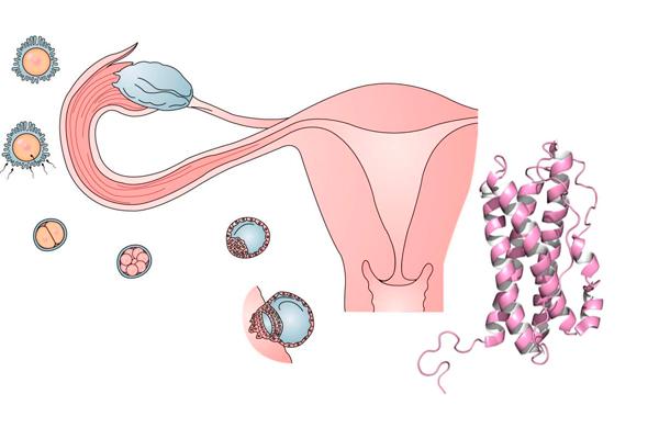 Пролактин: на какой день цикла сдавать анализы крови женщине