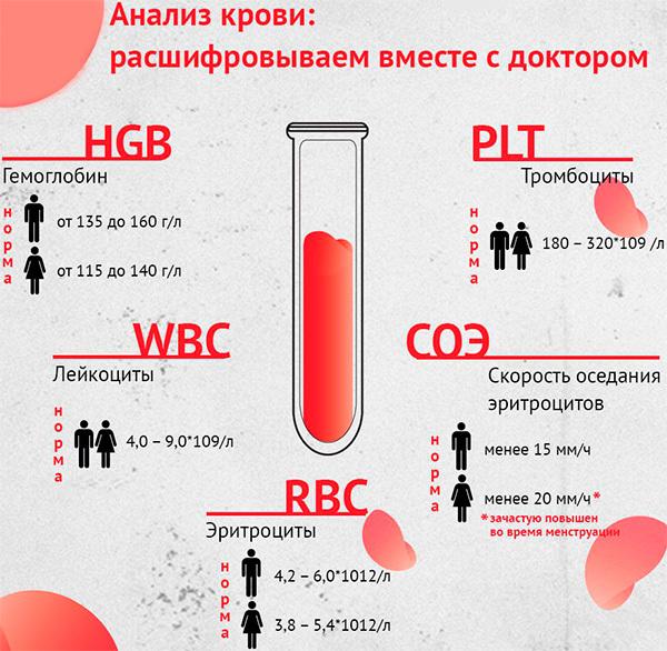 Можно ли сдавать кровь во время месячных и быть донором