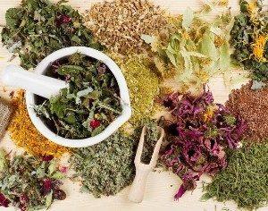 Кровоостанавливающие травы - перечень эффективных трав и рецепты