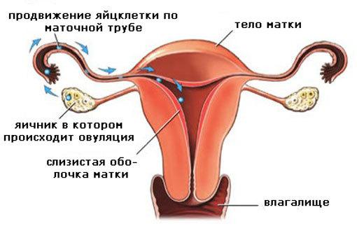 Может ли быть беременность при месячных и какие симптомы