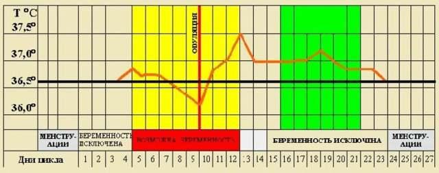 Овуляция при нерегулярном цикле: как рассчитать, методы лечения