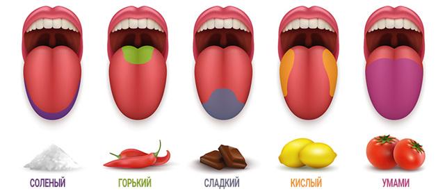 Вкусовые рецепторы языка, что это такое, основные виды вкус