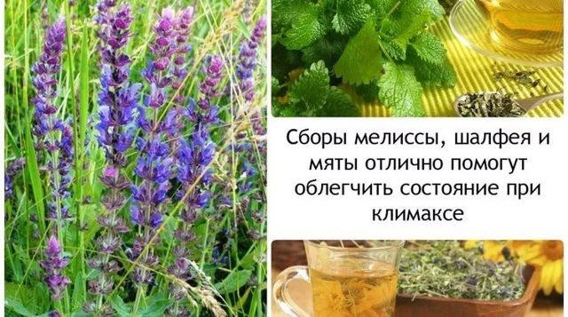 Травы при климаксе при приливах, потливости, с эстрогенами, народные средства