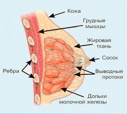 Дуктография молочных желез что это такое, больно ли делать процедуру