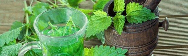 Крапива при месячных: эффективность и способы применения