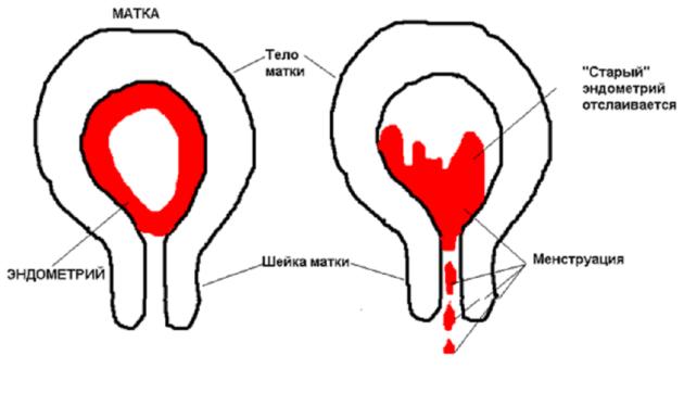 Отвар петрушки для месячных при задержке: как заварить, рецепт