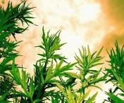 Чудо-трава женская. Какие травы полезны для женского здоровья