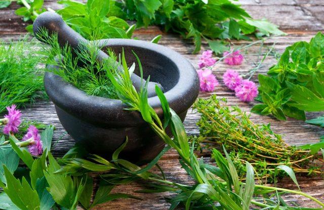 Кровоостанавливающие травы при обильных месячных: что пить, народные средства