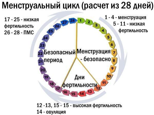 Овуляция при 28-дневном цикле: методы определения, срок наступления