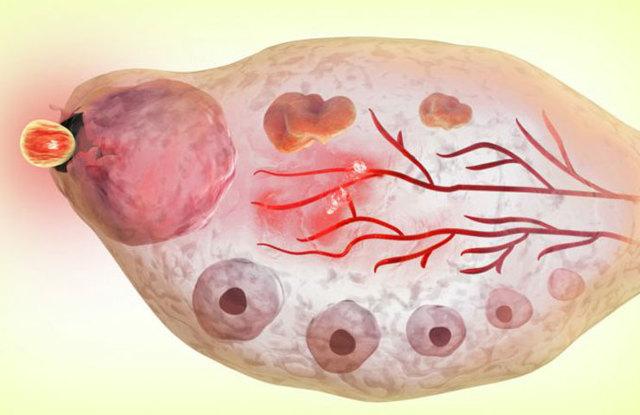 Сколько дней живет яйцеклетка после овуляции: ответ гинеколога, мнения